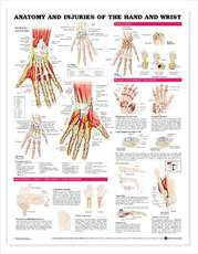 Anatomie Poster Anatomy And Injuries Of The Hand & Wrist (Pl1.5)